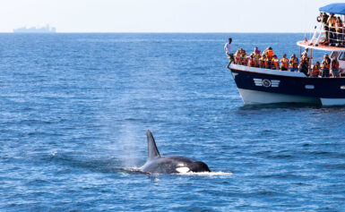 Why You Should Go On a Whale Watching Trip