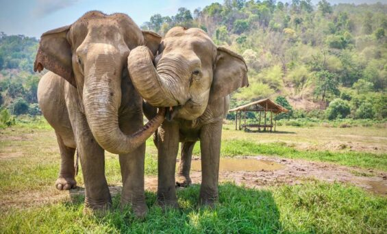 Finding Ethical Animal Attractions In Thailand